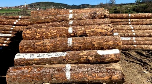 Orman İşletme Ürünlerinde Fiyat Rekoru