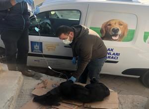 Belediyeden Sokak Hayvanları Konusunda Açıklama