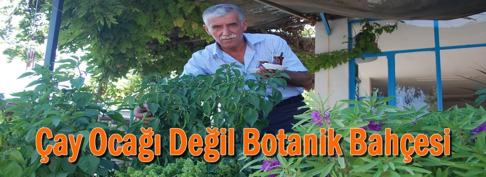 Çay Ocağı Değil Botanik Bahçesi
