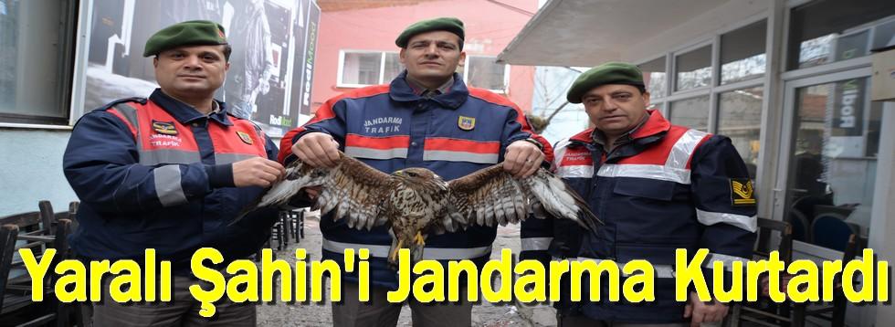 Yaralı Şahin'i Jandarma Kurtardı